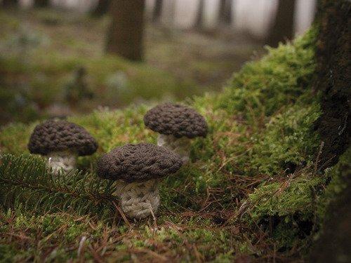 Häkelanleitung für Pilz
