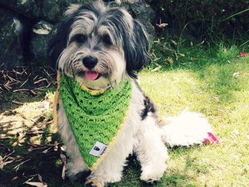 Häkelanleitung für Hundehalstuch Awara