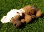 Amigurumi Hund Streuner