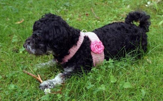 Hundegeschirr optional mit hübscher Rose (für kleine Hunde)