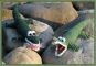 Häkelanleitung Amigurumi Krokodil & Memohalter