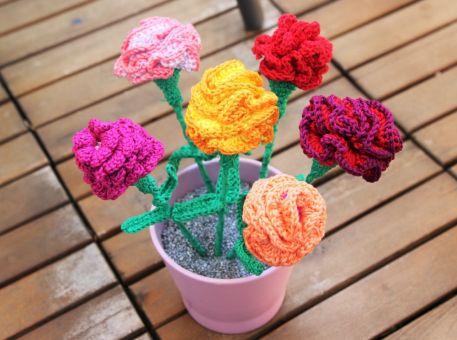 Bunte Sommerblume - Nelke