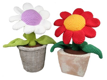 Topfpflanze - Blume